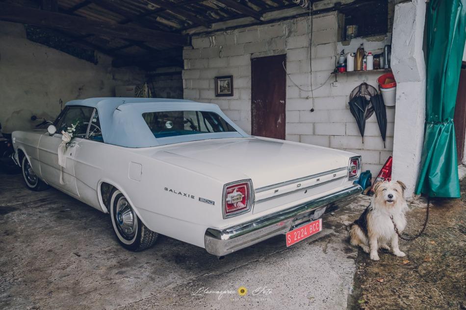 coche de novios, bodas con perro